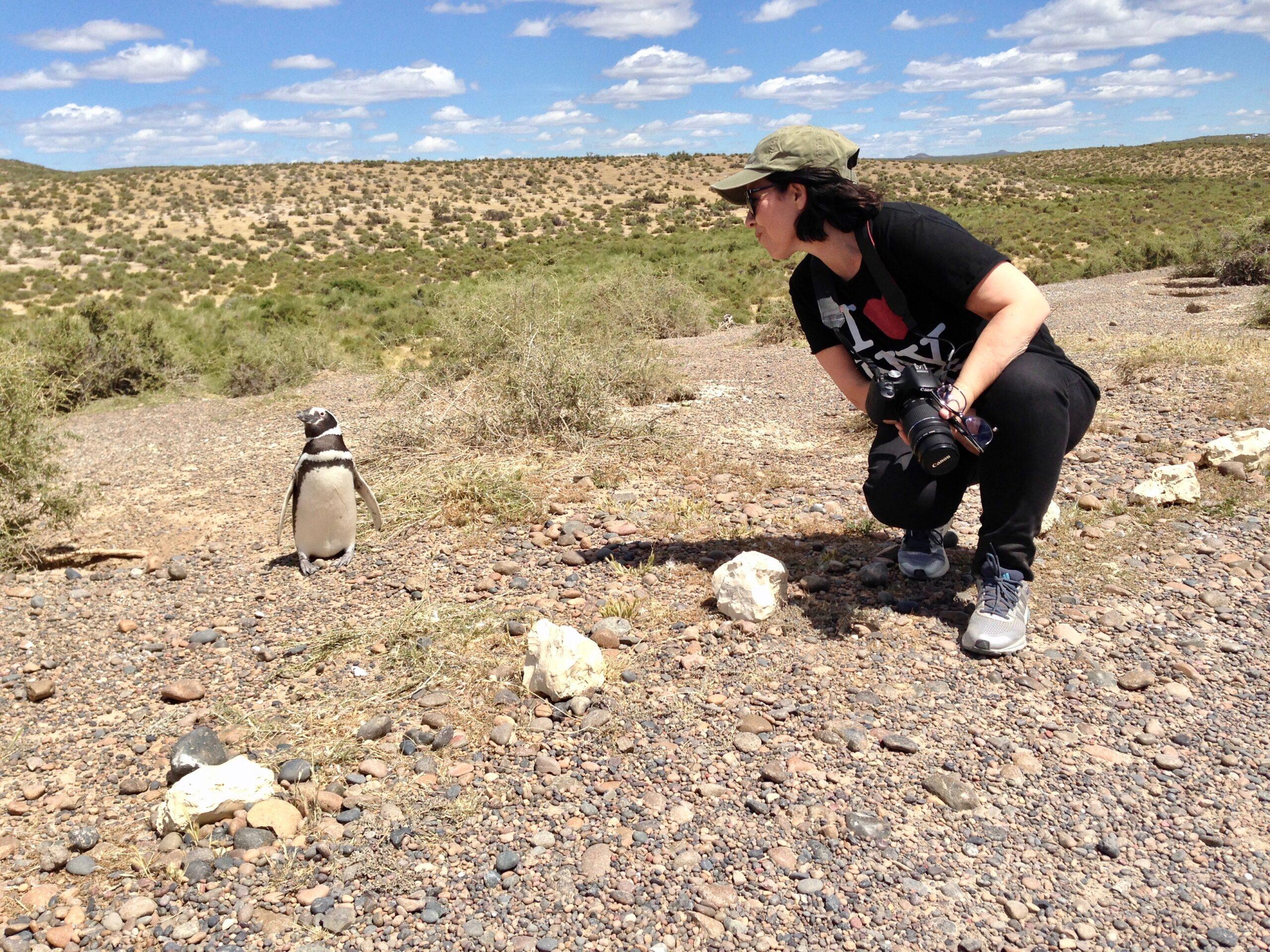 I pinguini di Magellano a Punta Tombo