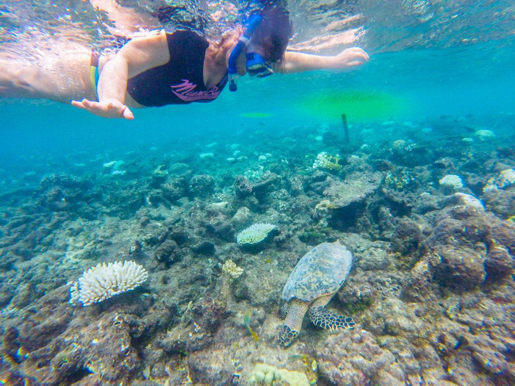 Maldive quale isola scegliere snorkerlig al Maafushivaru - Maldive