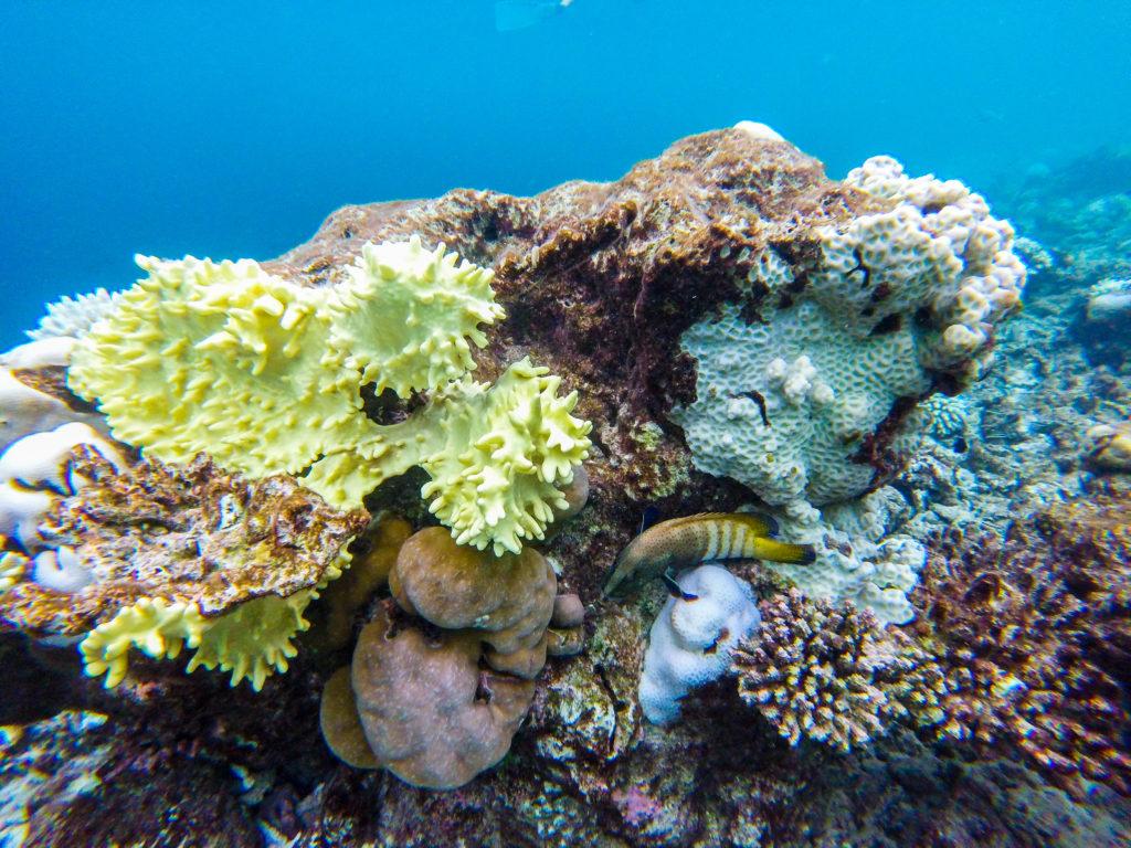Maldive quale isola scegliere Snorkeling mondo marino i bellissimi coralli delle Maldive