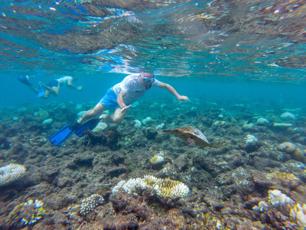 Maldive quale isola scegliere Incontri spettacolari con le tartarughe alle Maldive