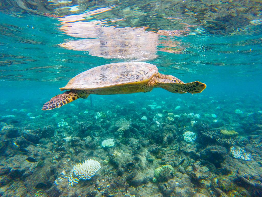 Snorkeling e incontri belli - Maafushivaru