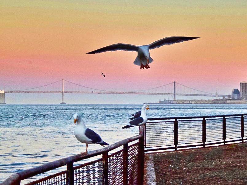 Tramonto ad Alcatraz California