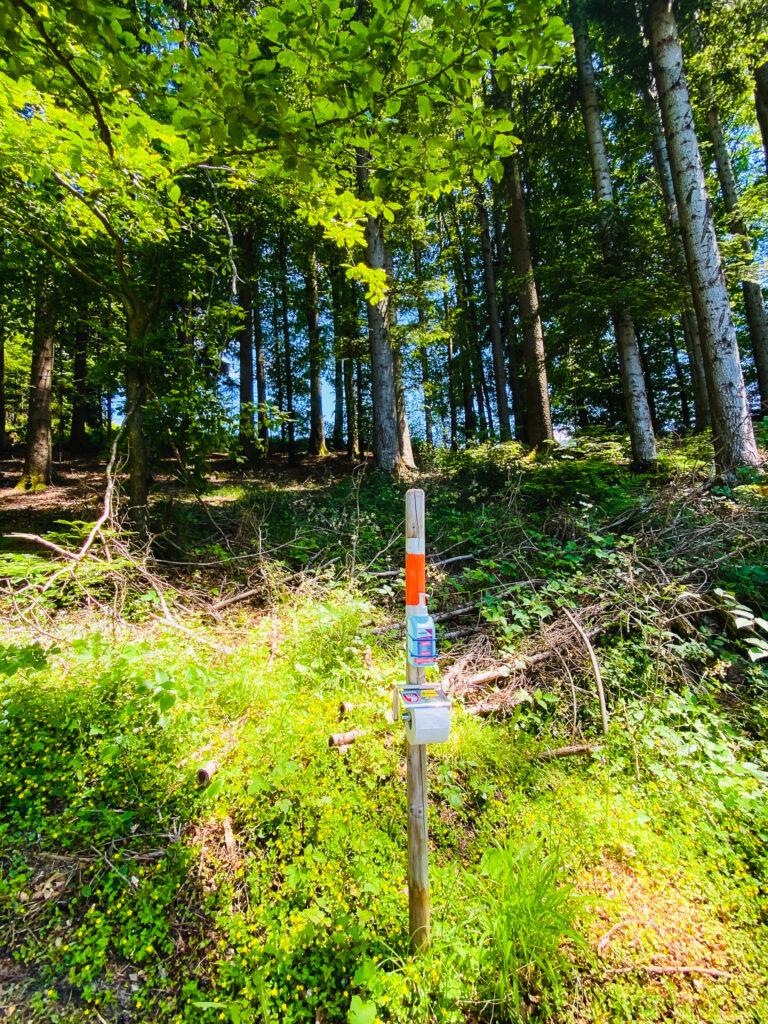 boschi Emmental