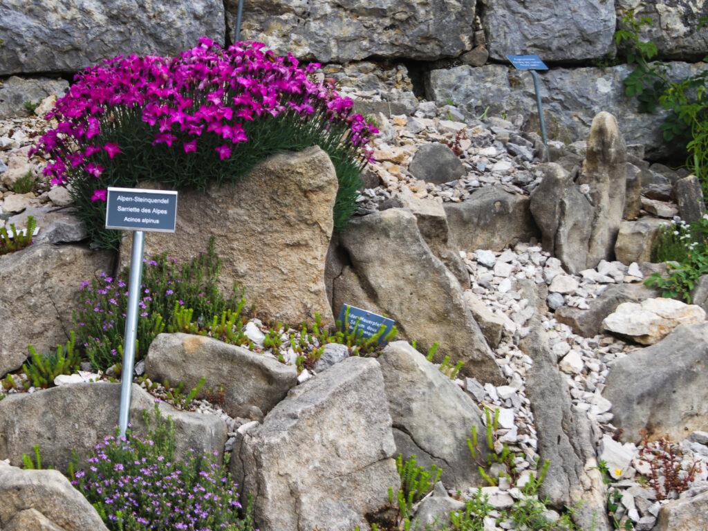 piante del giardino del Giura